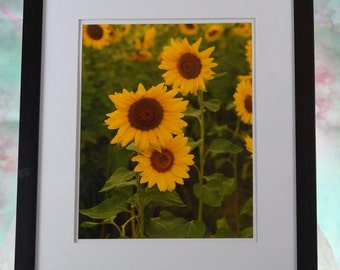 Sunflower grouping framed photo