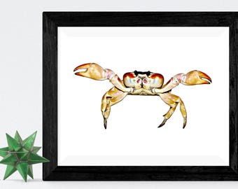 Crab Decor, Pictures of Crabs, Picture of Crabs, Pictures of Crab, Picture of Crab, Crab Wall Art, Crab Wall Decor, Crab Gift, Crab Art, Art