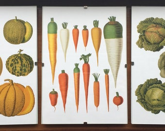 3 Hand crafted fruit and veg framed prints; pumpkins, parsnips, melons, cabbages and carrots