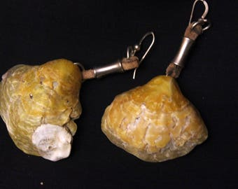 Shell earrings with filigrana