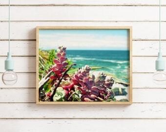Nautical Photography, Oceanside, Beach Print, California Coast Succulent, Ocean Waves, Colorful Wall Art, Nursery Art, Northern California