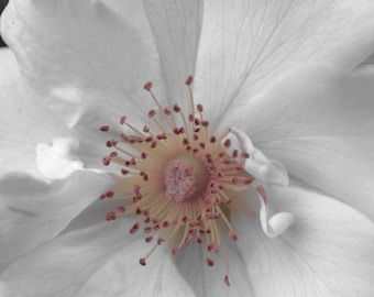 Large Floral Photography Print White Flower Art