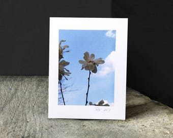 """Greeting card, Blank, All Occasions, """"Flower in the Shadows"""", 4 1/4 x 5 1/2 in"""