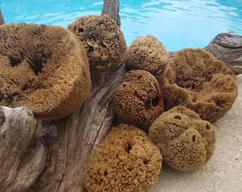 Unprocessed Raw Sea Sponges Natural Bath Beauty Craft Sponge 3 Sizes Healthy Natures Skincare Sensitive Skin Wool Soft Luxurious Texture