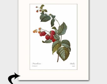 Raspberry Art w/Mat (Red Kitchen Decor, Fruit Gift for Cook, Antique Berry Wall Artwork) Matted Redoute Botanical Print