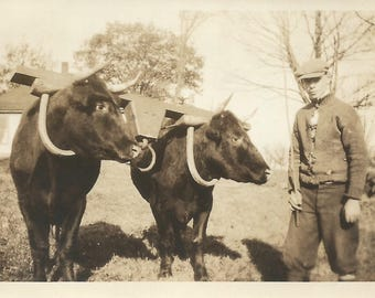 "Vintage Snapshot ""Olly Olly Oxen Free"" Teenage Boy Leading Oxen Rural America Farming Found Vernacular Photo"