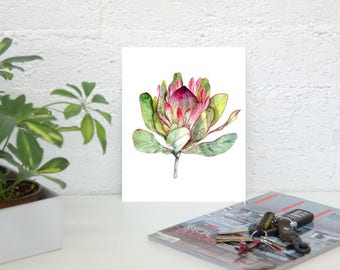 Pink Protea Flower -  Botanical Art Print of Watercolor Painting - Flower Art Wall Decor - Pink and Green Art - South African Art