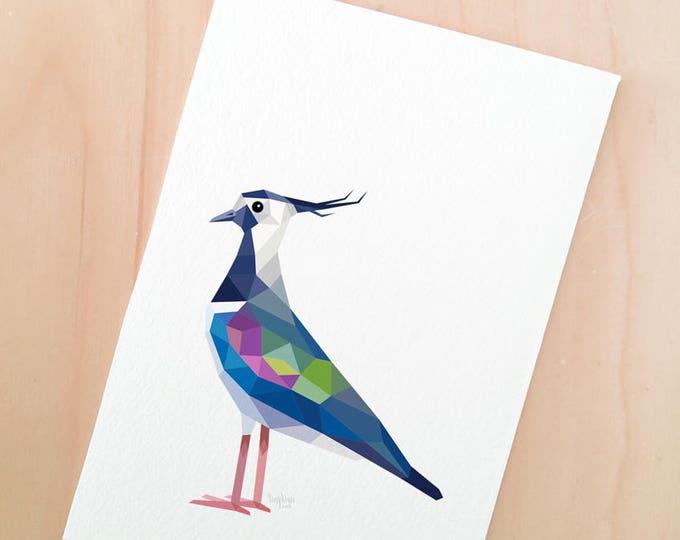 Northern lapwing illustration, Peewit print, European bird art, Coastal bird life, European wildlife, Tew-it, Green plover, Coastal birds,