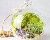 Kit Terrarium plante d'air minimal Petit || Personnaliser cristal + des éléments en pierre || Quartz rose, améthyste, Geode, Pyrite, Desert Rose