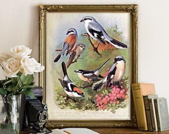 Botanical Print, Shrike Bird Print, Birds and Flowers, Vintage Bird Home Decor, Vintage Decorative Natural History Reproduction B050