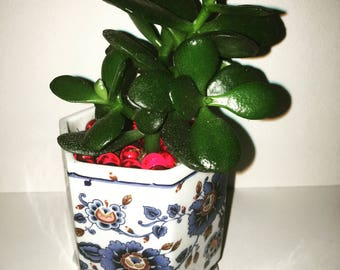 Mini Flower print decorative planter with jade plant succulent