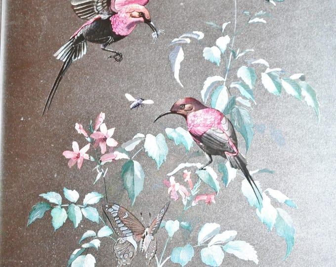 Vintage Humingbirds on Foil Print by Rena Framed Wall Decor Birds Butterflies PanchosPorch