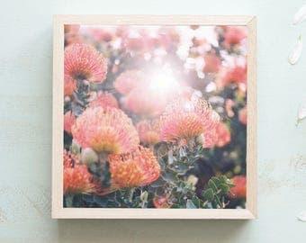 Protea Flowers Print - Fine Art Print, Large Art Print, Flower Wall Art, Boho Prints, Flower Still Life, Flower Photography