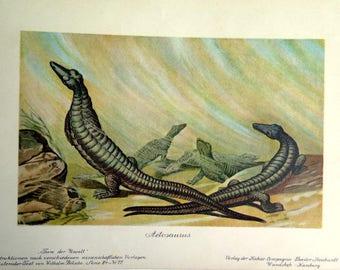 1900 Antique dinosaur Aetosaurus  lithograph, vintage color print of prehistoric animal, monster engraving aquatic marine lizard reptile