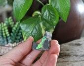 Raw Ammolite Specimen, Opalized Organic Gemstone, Fossil, Crystals, Pagan, Jewelry Making Supplies