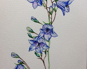 Greeting Card Bluebells