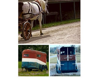 White Horse with Trailer