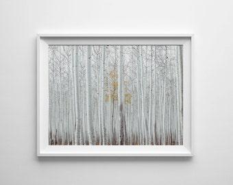 Birch print, birch tree photography, woodland print, white birch, white trees, birch instant download, birch digital download, birch art