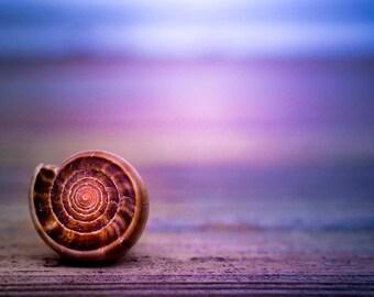 Seashell wall art, nautical wall art, seashell bathroom decor, seashell photography, seashell bathroom art, sea shell photo print
