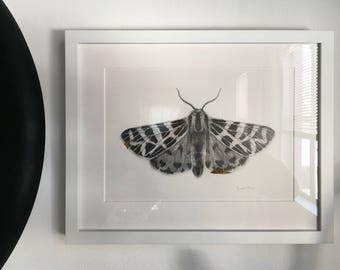 "Framed ""Kintsugi"" Original Graphite / Pencil Moth Drawing w/ 24kt Gold Leaf"