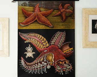 Antique 1963 Original STARFISH Pull Down Chart. Jung Koch Quentell School Chart. Large Sea Star Poster. Sea Life. Echinoderms. 54 years old