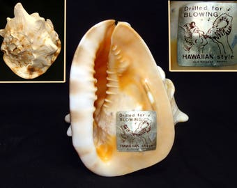 Vintage conch shell-hawaiian conch shell-drilled for blowing conch shell-ala makana hawaii conch shell-vintage  tiki room-polynesian room