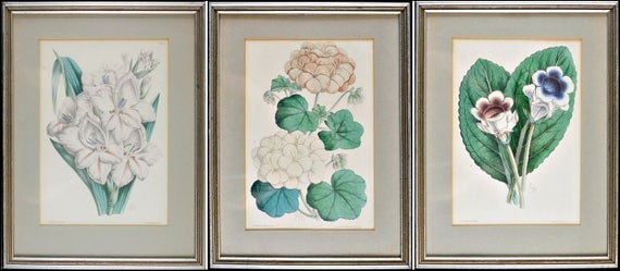 Framed Set Of 3 Hand Colored Antique Prints J Andrews Flowers Lithograph