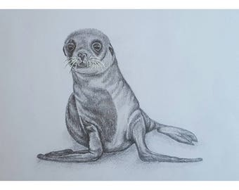 Seal Calf - Signed Limited Edition A4 Print of an original pencil drawing.