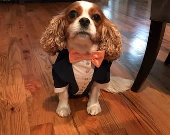 Royal blue wedding tuxedo woth peach bow Formal suit for dog with bow tie Special occasion evening outfit for dog Swallow-tailed coat for do
