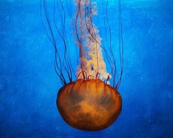 Aquarium Photography, Aquarium Print, Aquarium Art, Jellyfish Print, Jellyfish Poster, Underwater Art, Large Wall Art, Fine Art Photography
