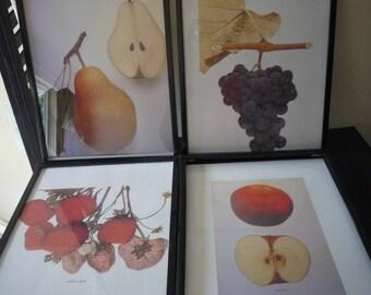 Fresh Fruit Four Framed prints - Beautiful gift for fruit lovers botanical -  framed set of fruit - pears, grapes, strawberries, apples