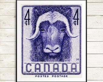 P122 Muskox, muskoxen, muskox stamps, muskox art, muskox prints, muskox posters, Canada Post, Canadian Postage, Canada Stamp Art, purple art