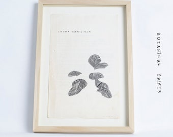 A4 Botanical Art Print, Vintage Paper