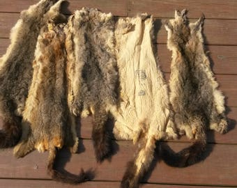 Australian opossum pelt soft tan art craft home cabin decor