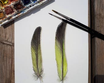 Watercolor feathers / Original watercolor feather