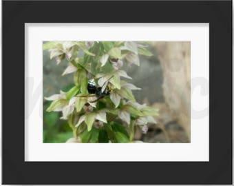 Wasp in the garden