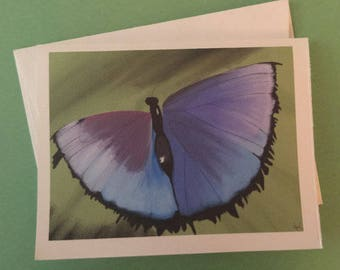 Blue and Purple Butterfly Art Notecards (set of 6 folded cards with envelopes in a clear box) - blue and purple butterfly art print