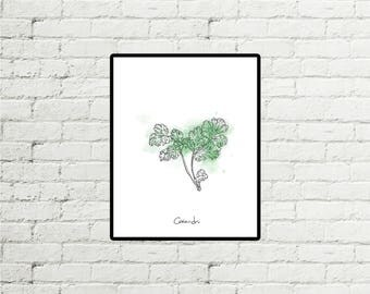 Coriander - Print 8 X 10 Illustration with watercolors