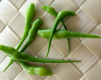 Raphanus caudatus Rat-tail Rat Radish Green Pods Organic Heirloom 50 Seeds #1191