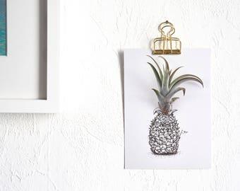 Luftpflanze Ananas Postkarte | Postkarte A6 gedruckt | Geschenkkarte |  Grußkarte
