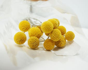 Dried Craspedia | Billy Balls | Dried Flowers | Floral Art | 15 Stem Bunch | Dried Flowers