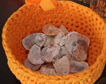 large sea shell, home decor,art,sea shell,wedding thank you cards,old sea shell,with orange basket