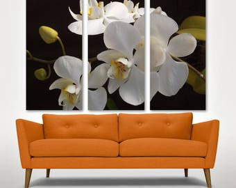 White Orchid Wall Art Canvas Print