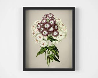 Botanical wall art, Flower art print, Printable print, Vintage illustration, Botanical plant print, Home wall decor, 11x14 digital download