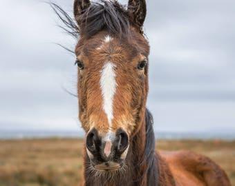 The Horse's Gaze