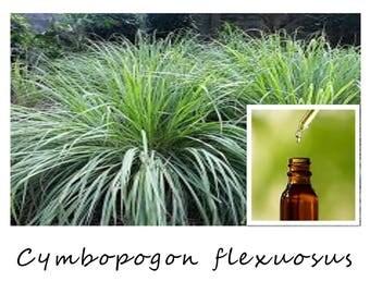 LEMONGRASS ESSENTIAL OIL, Cymbopogon flexuosus, 100% Pure Therapeutic Essential Oil