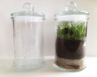 Terrarium - jar - jar - glass vase