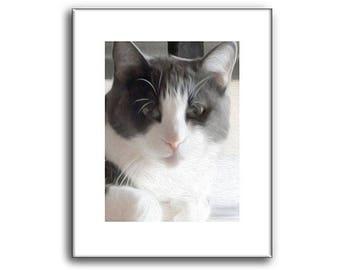 Gray Cat -  Cat Prints - Grey cat portrait - 8 x 10