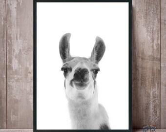 Llama Print, Alpaca Print, Llama Black and White, Nursery Animal Print, Nursery Decor, Farm Animal Print, Digital Print, Llama Poster