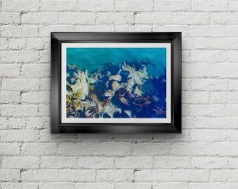 Alaskan Mussel 4 Abstract Fine Art Print, Canvas Gallery Wrap, Water Abstract Fine Art Print, Shellfish Wall Decor, Home Decor,Northwest Art